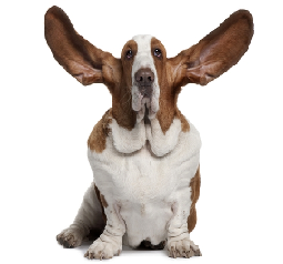 Using your ears!